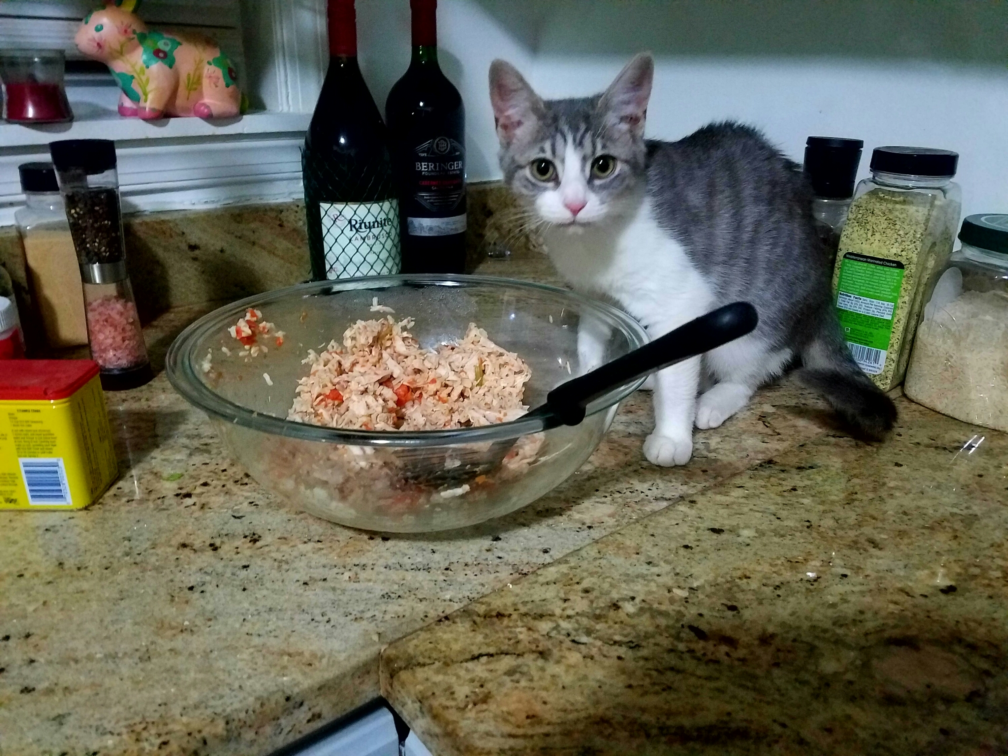 Homemade Woofie Food you say, Humans, with organic chicken, celery, carrot and brown rice? Are you certain you followed the recipe correctly?