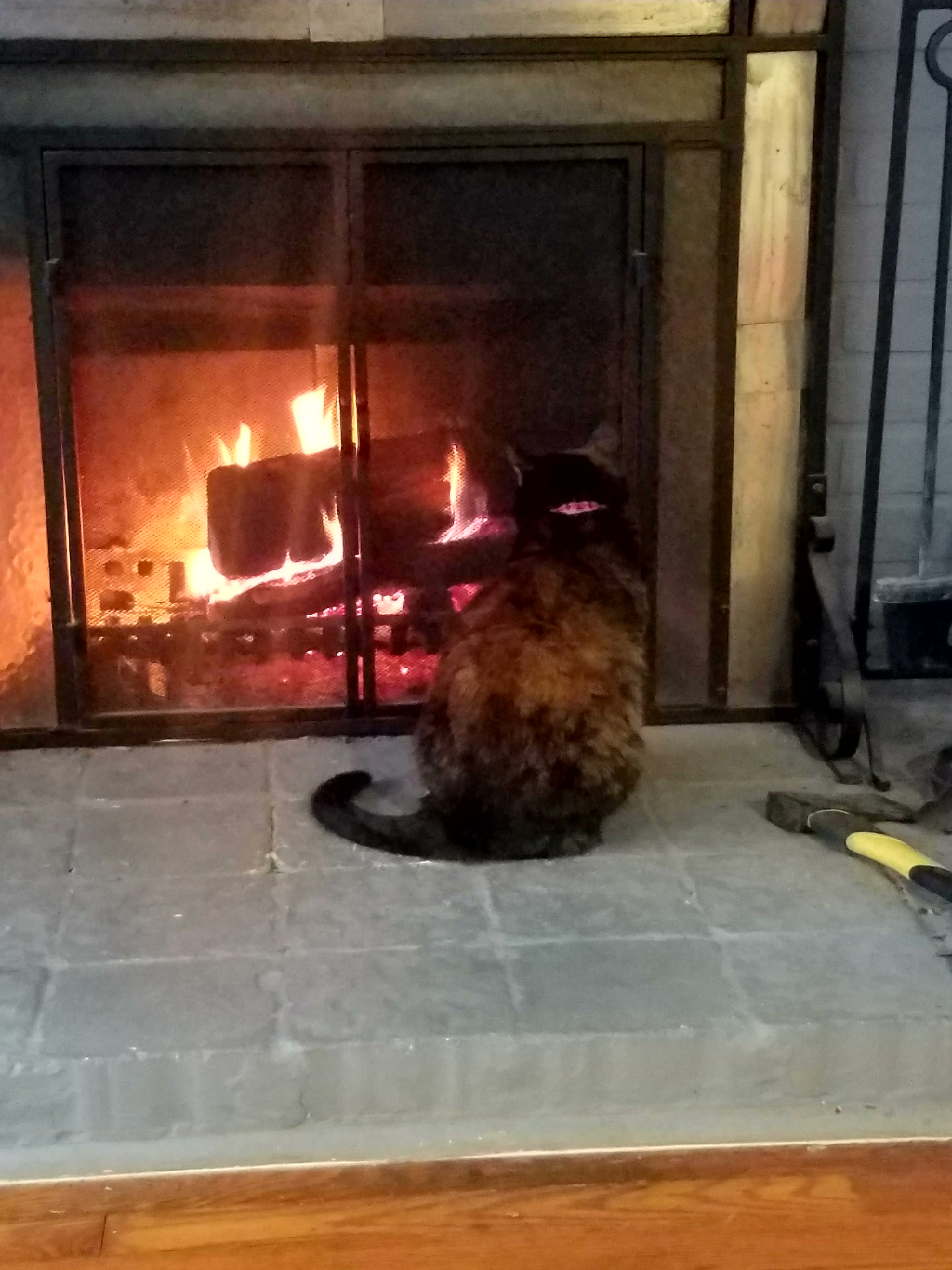 sevencatsandcounting u2013 daily feline wisdom